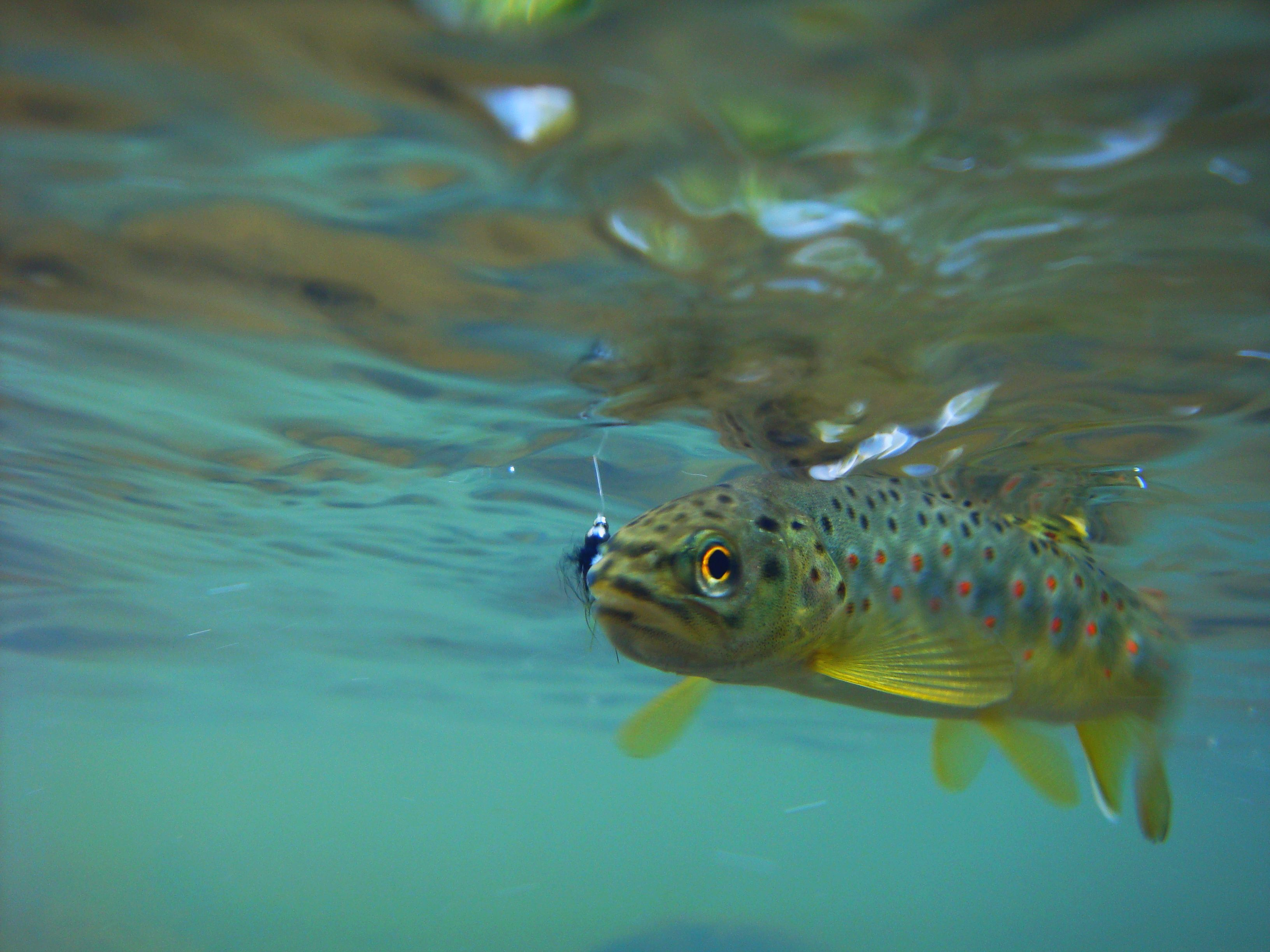 Fish through the winter in the Dan River region |